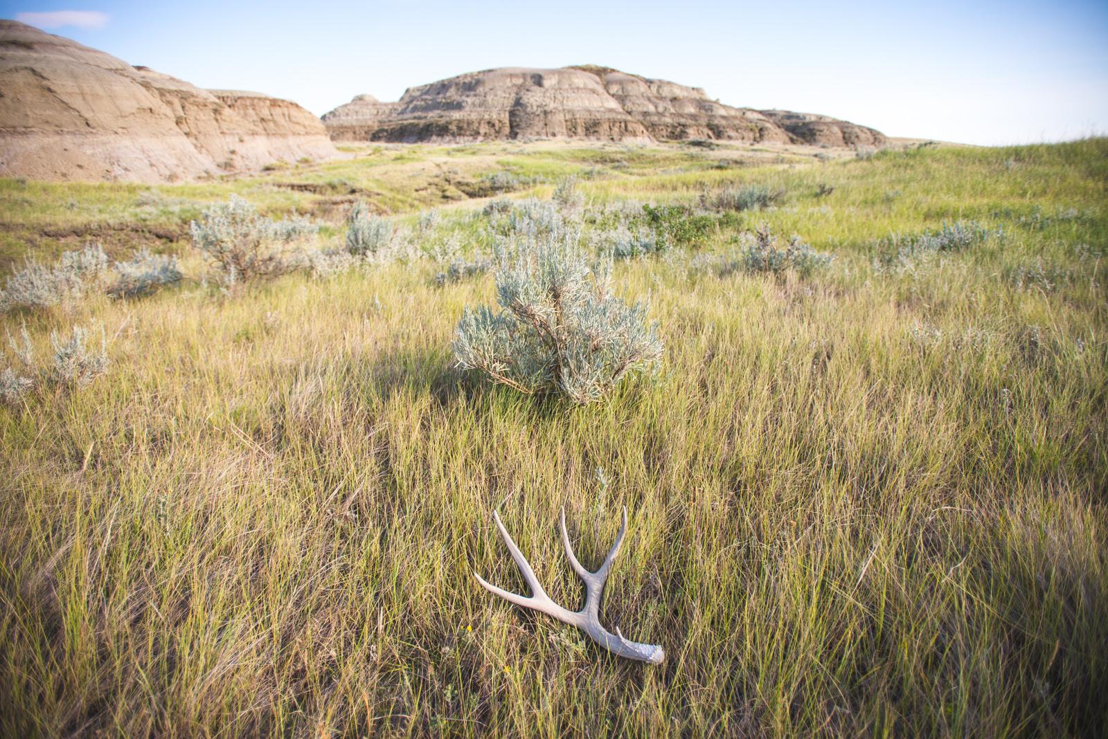 grasslands_national-8011